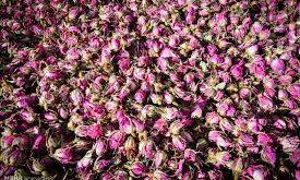 تولیدی گرده گل محمدی