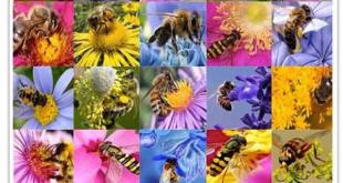 خرید انواع عسل طبیعی
