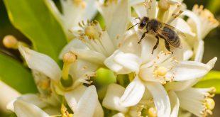 عسل مرکبات طبیعی