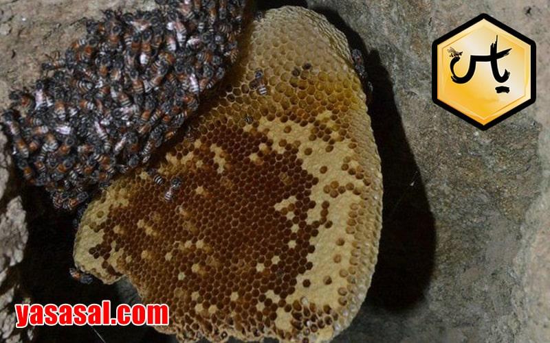 فروش عمده عسل کوهی